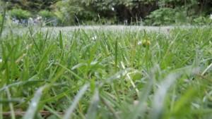 Rasen sprengen mit Regenwasser